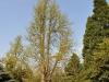20110417_Berggarten_12