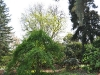 20110417_Berggarten_15