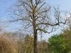 20110417_berggarten_43