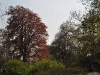 20110417_berggarten_44
