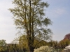20110417_berggarten_73