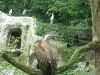 2010-07-21_zoo_23