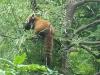 2010-07-21_zoo_40